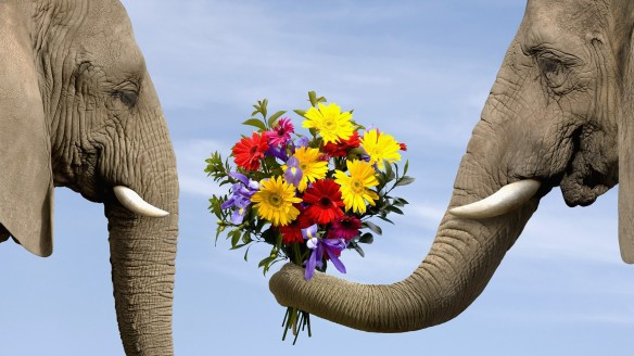 elephant-giving-flowers-1
